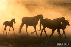Аркаим. Челябинская область, лошади, табун