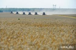 Дубровский и пшеница Челябинск, поле, комбайн, пшеница, урожай, жатва