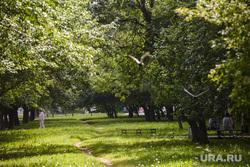 Тополиный пух в Екатеринбурге, тропинка, парк, зелень, лето