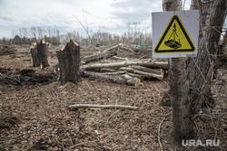 Вырубка парка на пересечении улиц Республики и Пермякова. Тюмень , спиленные деревья, пни, знак работает кран