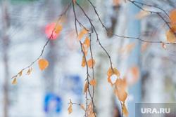 Клипарт. Ханты-Мансийск, зима, листья, осень