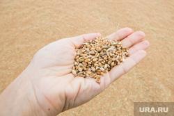 Фермерские хозяйства. г. Шадринск, сельское хозяйство, зерно