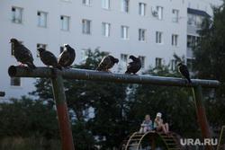 Виды Перми, двор, турник, игровая площадка, ребенок, дети, голуби