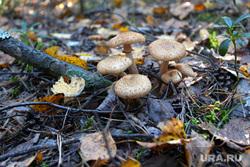 Осенняя природа, разное Курган, грибы, осенний лес, опята