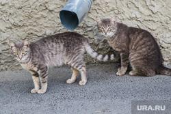 Подвальные коты. Курган, бездомные животные, кошки, коты