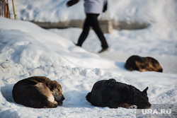 Клипарт. Екатеринбург, бездомные животные, бродячие собаки