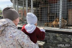 Депутаты городской думы в Челябинском зоопарке. Челябинск, вольер, лев, зоопарк, клетка