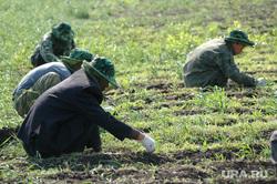 Китайцы. Гастарбайтеры. Сельское хозяйство. Архив 2007. Челябинск., сельское хозяйство, китайцы