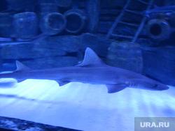 Турция, акула