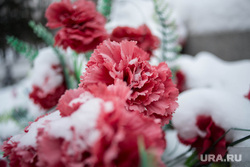 Клипарт, цветы, траур, гвоздики, снег