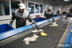 Пресс-тур на мусоросортировочный завод. Тюмень, конвейер, сортировка мусора, мусоросортировочный завод, тэо