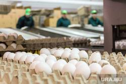 Пасхальная экскурсия на хлебокомбинат и птицефабрику «СИТНО». Магнитогорск, яйца, птицефабрика, еда