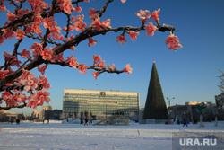 Зимние виды города Пермь, город пермь, гирлянда цветов, зима, елка на площади