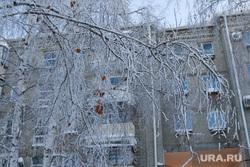 Зимний Курган., зима, ветви деревьев в снегу