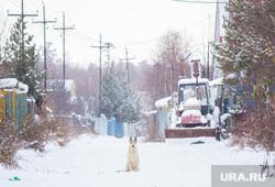Собаки и дачи. Нижневартовск, собака, частный сектор, сады, огороды, дачи