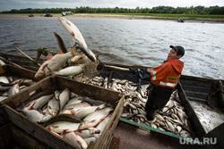 Добыча рыбы в Сургутском районе. Сургут, рыбак, улов, рыба