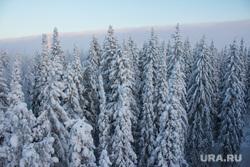 Горнолыжный комплекс «Хвойный Урман». Ханты-Мансийск., зимний лес, белые ели