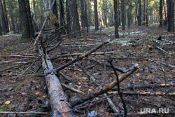 Осенняя природа, разное Курган, бурелом, поваленный лес