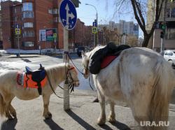 Прогулка с фотографом и участником проекта Новые истории Екатеринбурга Алиной Десятниченко по городу, лошадь, животные, катание на лошадях, пони, парнокопытные