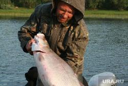 Клипарт 2, муксун, рыбалка, улов, браконьер