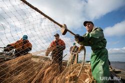 Добыча рыбы в Сургутском районе. Сургут, рыбаки, невод