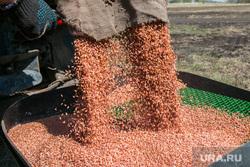 Посевная. Поселок Глинки. Курган, пшеница, посевная, зерно, засыпка зерна, сельское хозяйство