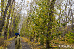 Виды Екатеринбурга, деревья, парк, тополь, осень