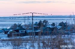 Поселок Новоянгелька. (Агаповский район). Челябинская область, птицы, деревня, зима, вечер