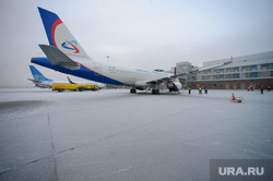 Львица Лола вылетает в Крым. Екатеринбург, уральские авиалинии