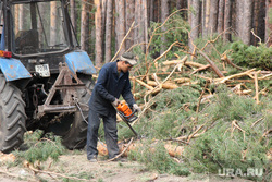 Вырубка леса КГСХА Курганская область, вырубка леса, распил дерева
