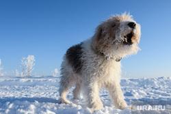 Виды Кунгура. Пермский край, собака, выгул собак, домашний питомец
