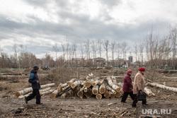 Вырубка парка на пересечении улиц Республики и Пермякова. Тюмень , бревна, спиленные деревья, пешеходы