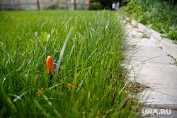 Ботанический сад УрФУ. Екатеринбург, трава, лето, зелень, газон