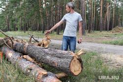 Вырубка леса КГСХА Курганская область, кузнецов евгений, неликвидная древесина
