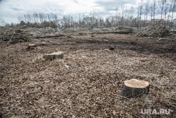 Вырубка парка на пересечении улиц Республики и Пермякова. Тюмень , пустырь, пни