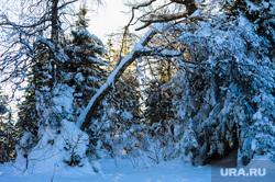 Хребет Зигальга, поселок Верхний Катав, Челябинская область, зима, лес