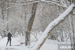 Мартовский снег в Екатеринбурге, снег, зима, выгул собак, парк, снег в городе, прогулка по парку