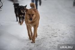 Клипарт. Екатеринбург, собака, бездомные животные, бродячие животные