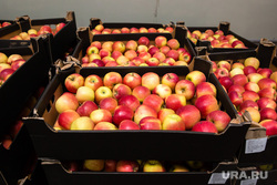Экскурсия на комбинат школьного питания. Сургут, фрукты, яблоки