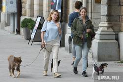 Виды Стокгольма. Швеция, выгул собак, домашние животные, прогулка с собакой