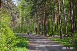 Шарташский лесопарк. Каменные палатки. Екатеринбург, лес, деревья, лето, лесопарк шарташский