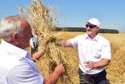 Лукашенко, урожай, лукашенко александр
