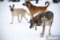 Питомник  Лунёвой. Сургут, бездомные животные, бродячая собака