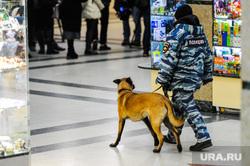 Военно-патриотическая акция «Сирийский перелом». Челябинск, кинолог, служебная собака