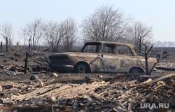 Лесные пожары. Курган, последствия пожара