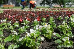 Неблагоустроенный Екатеринбург, клумба, благоустройство территории, городские цветы, петуния