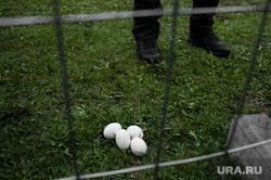 Акция против строительства собора святой Екатерины на территории сквера у Театра драмы. Екатеринбург, яйцо куриное