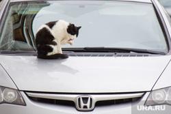 Клипарт new. Нижневартовск., кошка, хонда, кот, наглость