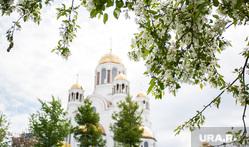 Виды Екатеринбурга, храм на крови, растение, яблоня, дерево