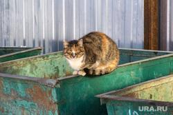 Село Париж Нагайбакского района. Челябинская область, кошка, мусорный бак, цкс